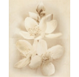 DEC DIANA FLOWER декор2 400x500