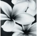 PRET-A-PORTER BLACK FLOWER COMPOSITION декор3 750x750